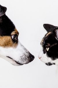 Dog and Cat in a face off