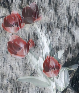Tulips with filter effect