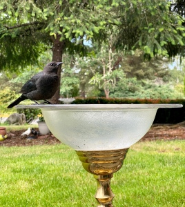 Bird sitting on birdbath