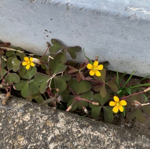 Tiny yellow flowers blooming in an obscure place.