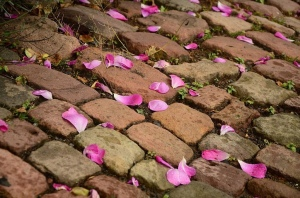 Brick pathway with scattered pink rose petals